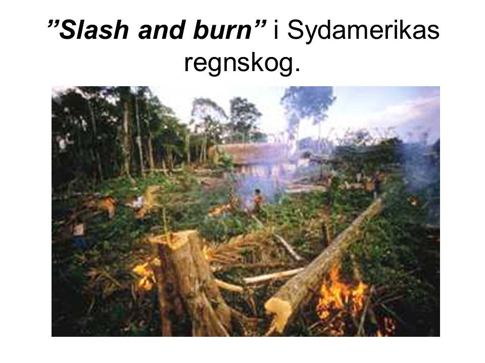 """Slash and burn"" i Sydamerikas regnskog."