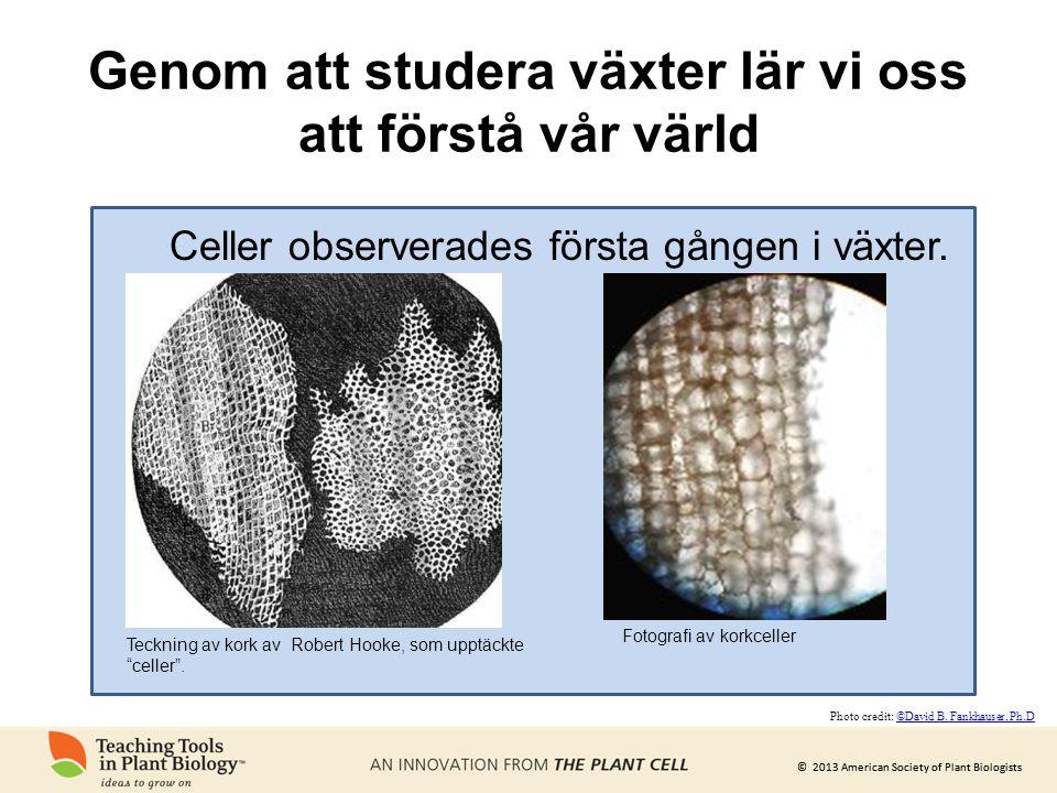 """© 2013 American Society of Plant Biologists Genom att studera växter lär vi oss att förstå vår värld Teckning av kork av Robert Hooke, som upptäckte """""""