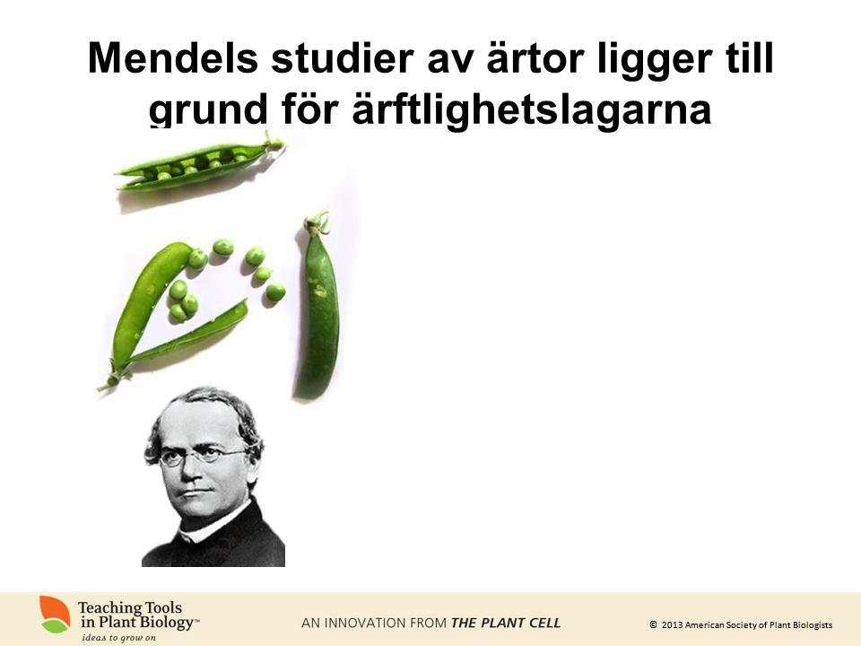 © 2013 American Society of Plant Biologists Mendels studier av ärtor ligger till grund för ärftlighetslagarna