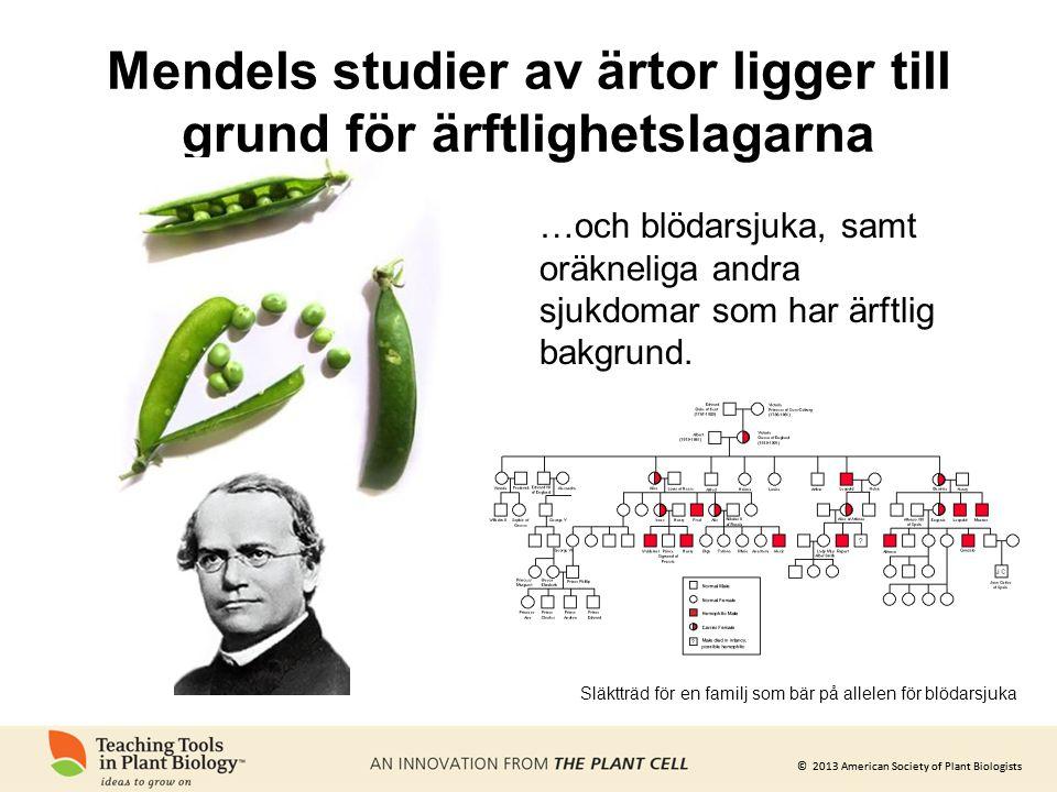 © 2013 American Society of Plant Biologists Mendels studier av ärtor ligger till grund för ärftlighetslagarna …och blödarsjuka, samt oräkneliga andra