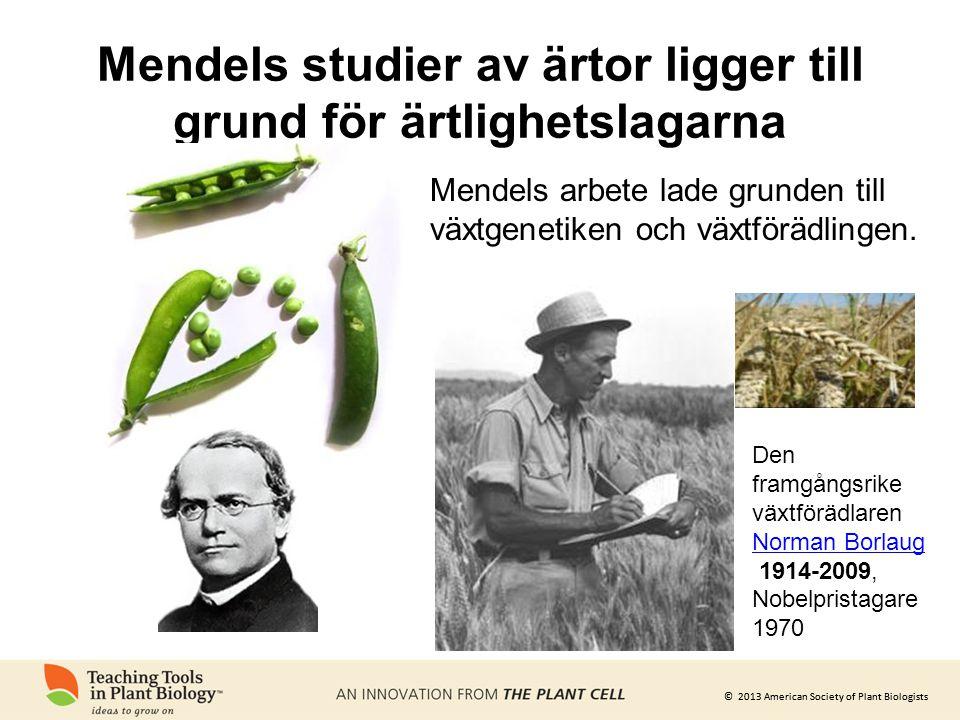 © 2013 American Society of Plant Biologists Mendels studier av ärtor ligger till grund för ärtlighetslagarna Mendels arbete lade grunden till växtgene