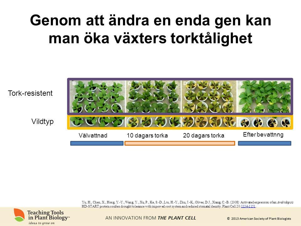 © 2013 American Society of Plant Biologists Genom att ändra en enda gen kan man öka växters torktålighet Yu, H., Chen, X., Hong, Y.-Y., Wang, Y., Xu,
