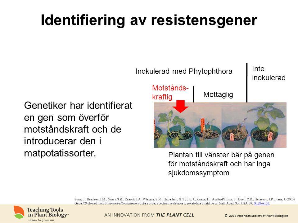 © 2013 American Society of Plant Biologists Identifiering av resistensgener Motstånds- kraftig Inokulerad med Phytophthora Inte inokulerad Mottaglig P
