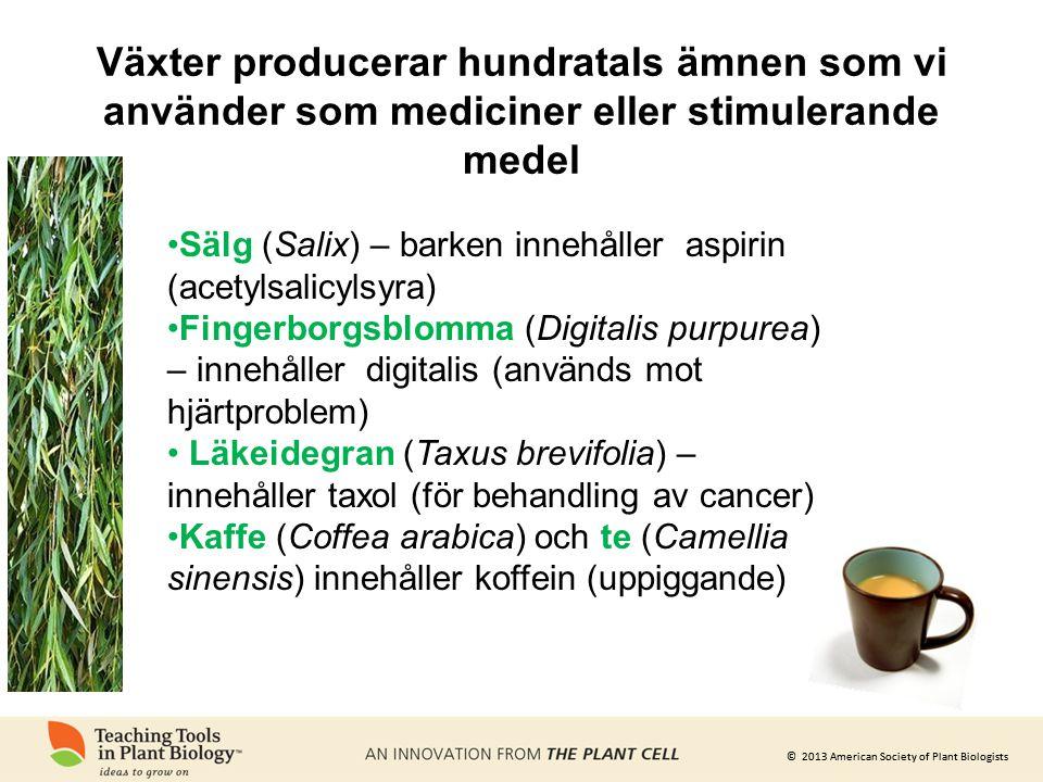 © 2013 American Society of Plant Biologists Växter producerar hundratals ämnen som vi använder som mediciner eller stimulerande medel •Sälg (Salix) –