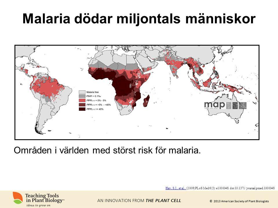 © 2013 American Society of Plant Biologists Malaria dödar miljontals människor Områden i världen med störst risk för malaria. Hay, S.I., et al., Hay,