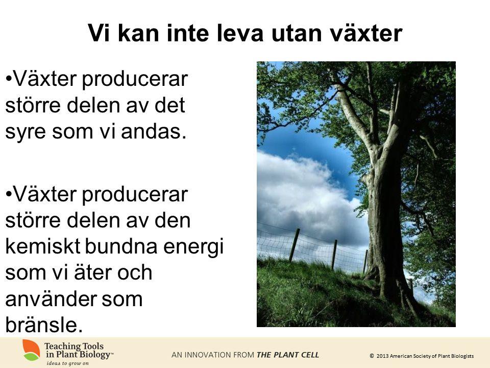 © 2013 American Society of Plant Biologists Det motsvarar hela befolkningen i USA, Kanada, EU och Kina tillsammans.