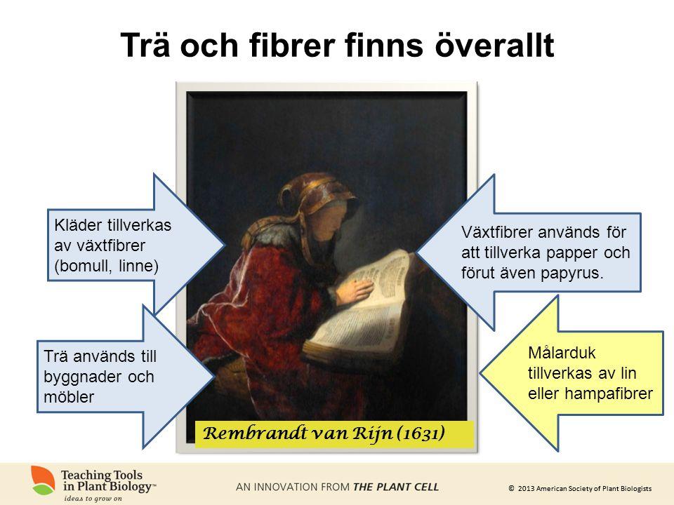 © 2013 American Society of Plant Biologists Trä och fibrer finns överallt Rembrandt van Rijn (1631) Kläder tillverkas av växtfibrer (bomull, linne) Vä