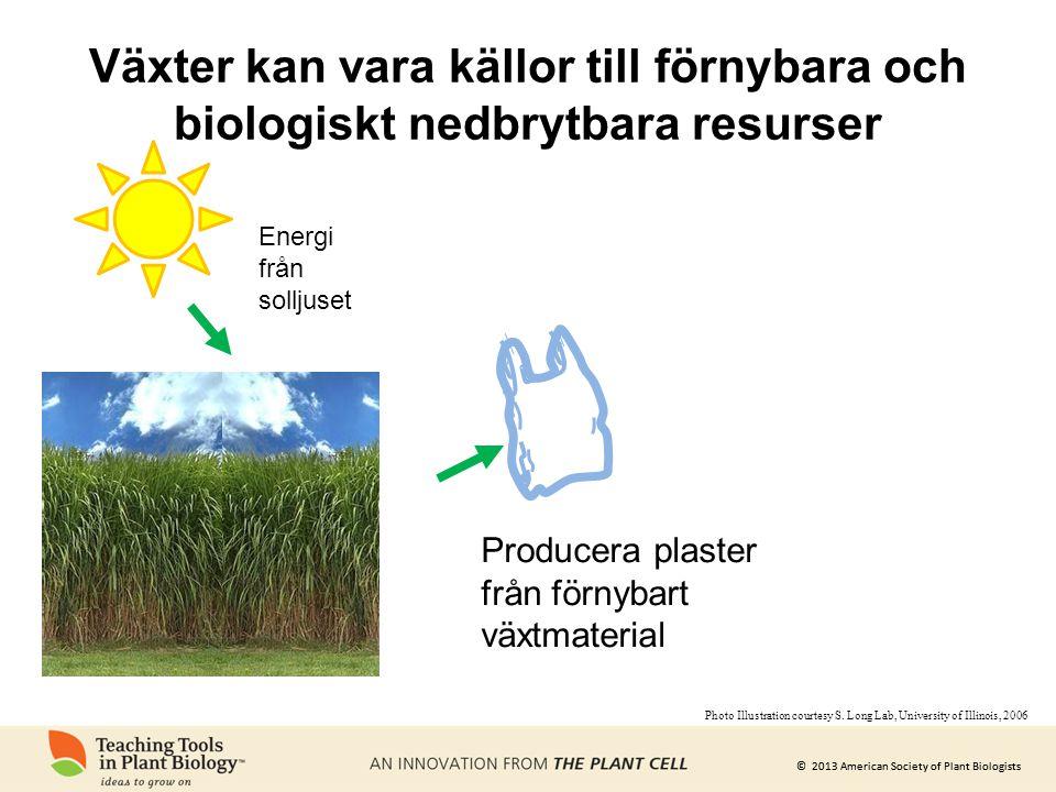 © 2013 American Society of Plant Biologists Växter kan vara källor till förnybara och biologiskt nedbrytbara resurser Energi från solljuset Producera