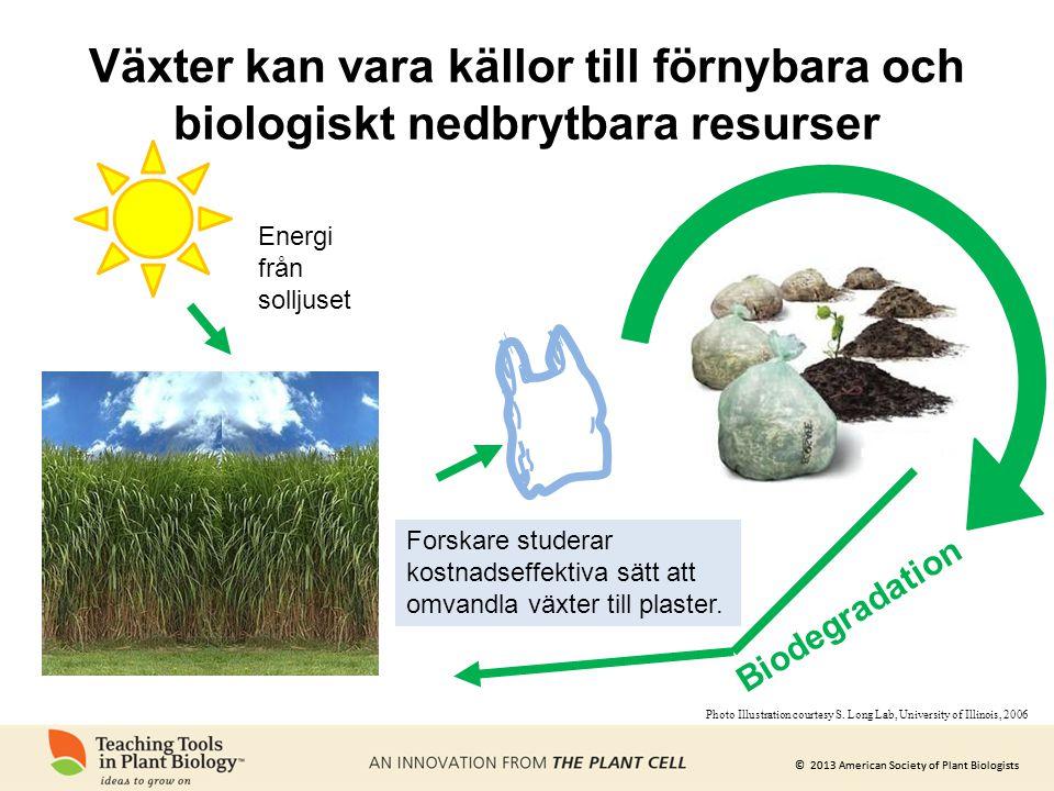 © 2013 American Society of Plant Biologists Energi från solljuset Biodegradation Växter kan vara källor till förnybara och biologiskt nedbrytbara resu
