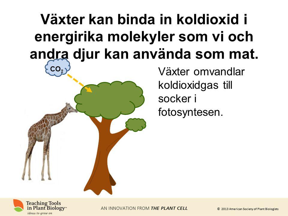 © 2013 American Society of Plant Biologists Växter kan binda in koldioxid i energirika molekyler som vi och andra djur kan använda som mat. CO 2 Växte