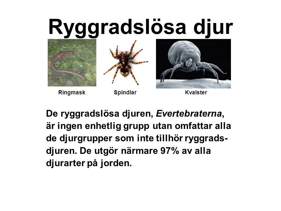 Av de ryggradslösa djur vi idag känner till är ca 2 av 3 leddjur, det vill säga insekter, spindeldjur och kräftdjur.