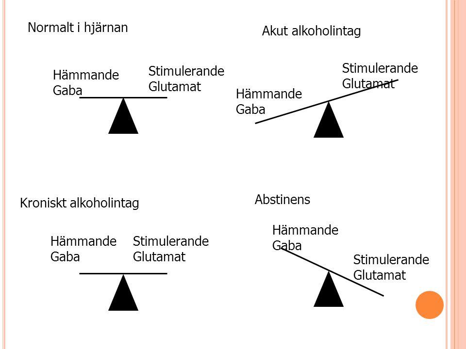 Normalt i hjärnan Akut alkoholintag Kroniskt alkoholintag Abstinens Hämmande Gaba Stimulerande Glutamat Stimulerande Glutamat Stimulerande Glutamat St