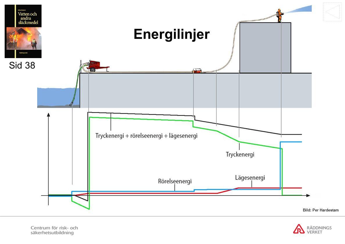 Cirkulations- och förgreningssystem Förgreningssystem Cirkulationssystem Sid 41 Bild: Per Hardestam