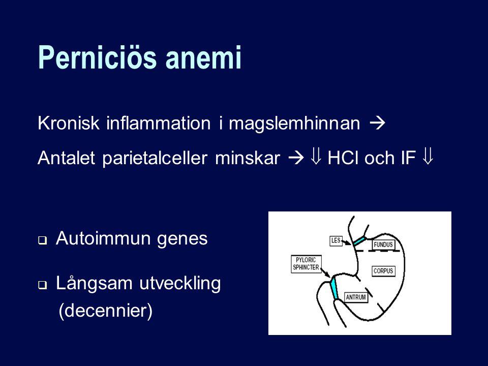 Kronisk inflammation i magslemhinnan  Antalet parietalceller minskar   HCl och IF   Autoimmun genes  Långsam utveckling (decennier)