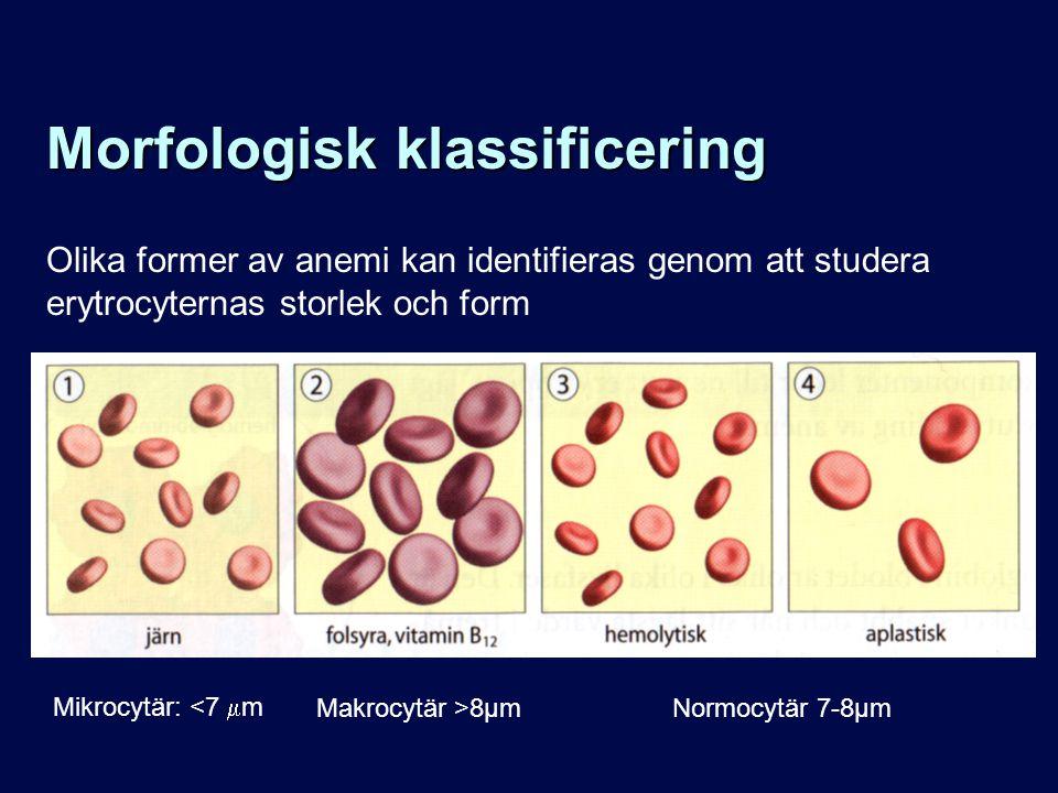 Morfologisk klassificering Olika former av anemi kan identifieras genom att studera erytrocyternas storlek och form Mikrocytär: <7  m Normocytär 7-8µmMakrocytär >8µm