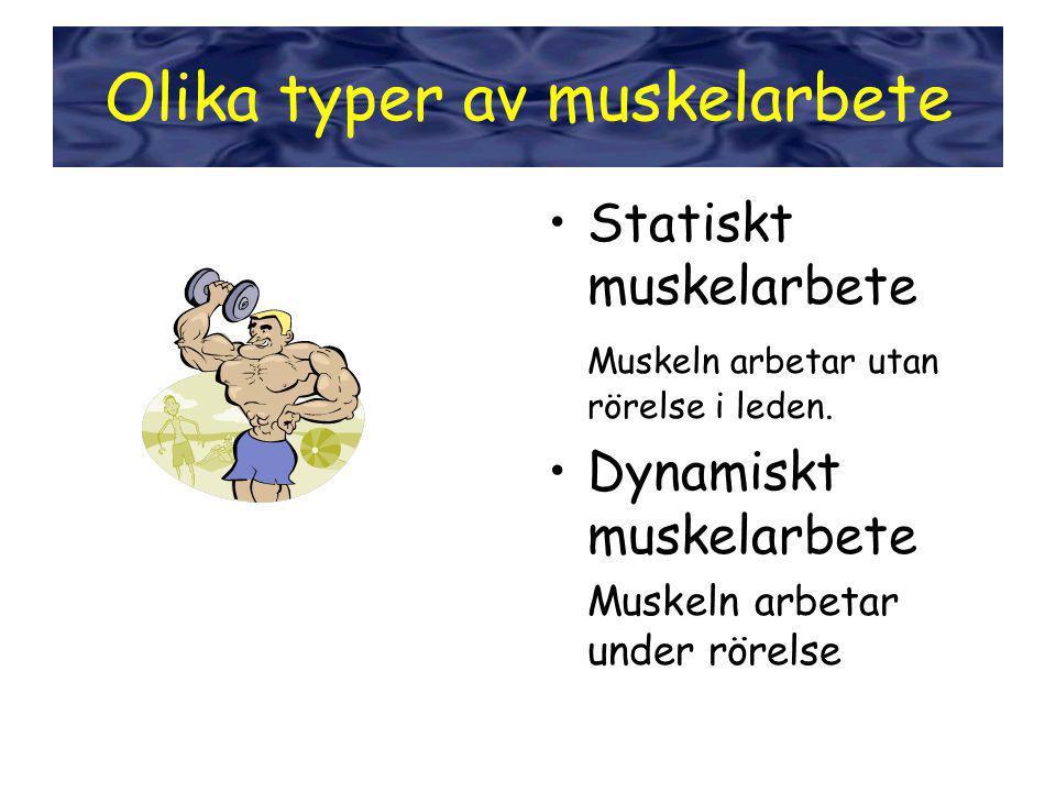 Styrka •Statiskt muskelarbete Muskeln arbetar utan rörelse i leden. •Dynamiskt muskelarbete Muskeln arbetar under rörelse Olika typer av muskelarbete