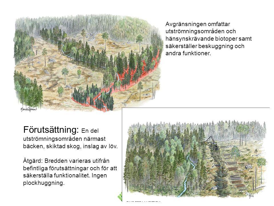 Avgränsningen omfattar utströmningsområden och hänsynskrävande biotoper samt säkerställer beskuggning och andra funktioner. Förutsättning: En del utst