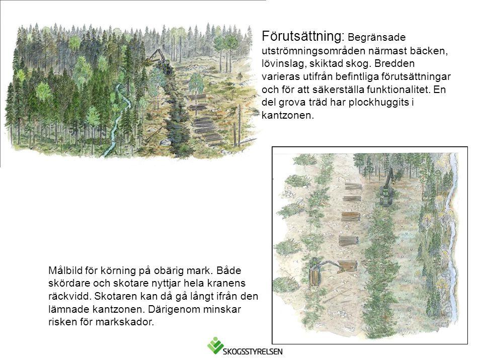 Förutsättning: Begränsade utströmningsområden närmast bäcken, lövinslag, skiktad skog. Bredden varieras utifrån befintliga förutsättningar och för att