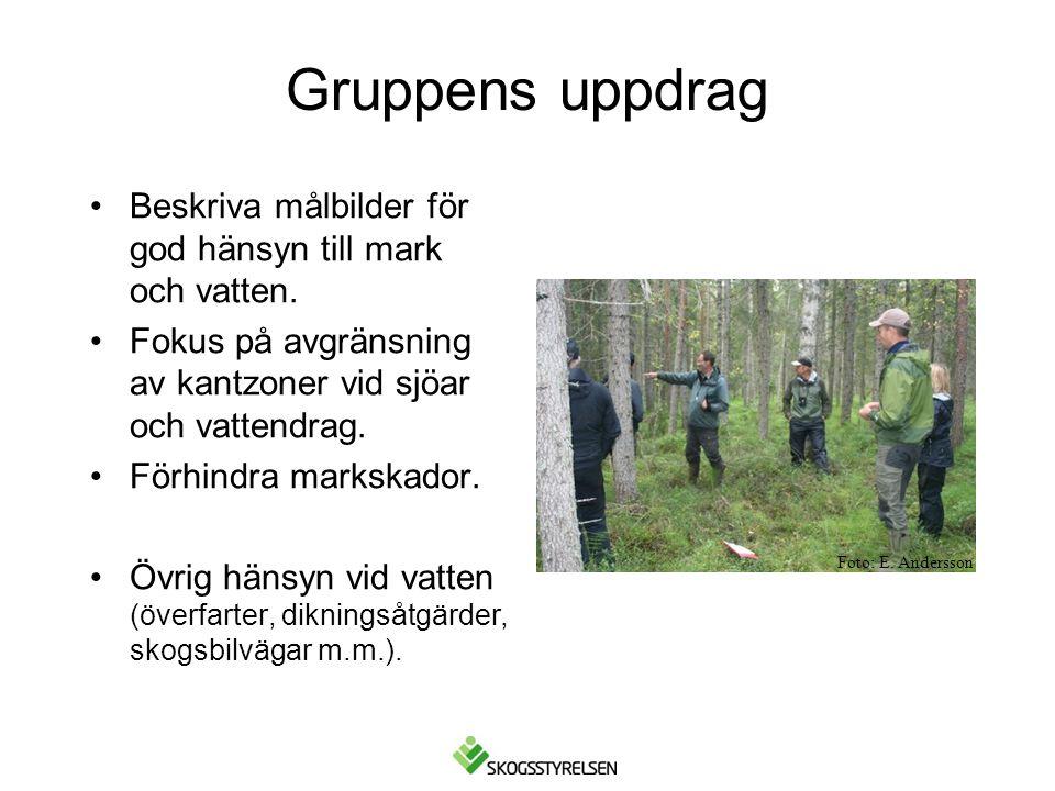 Förutsättning: Begränsade utströmningsområden närmast bäcken, lövinslag, skiktad skog.