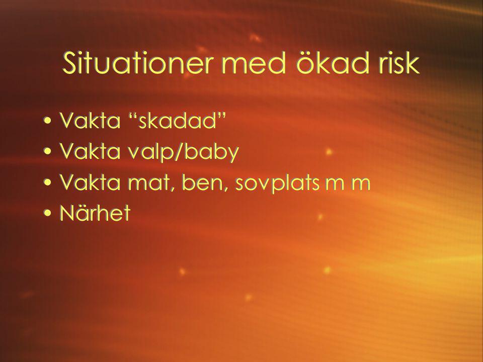 """Situationer med ökad risk •Vakta """"skadad"""" •Vakta valp/baby •Vakta mat, ben, sovplats m m •Närhet •Vakta """"skadad"""" •Vakta valp/baby •Vakta mat, ben, sov"""