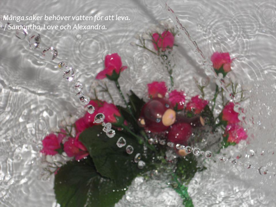 Många saker behöver vatten för att leva. / Samantha, Love och Alexandra.