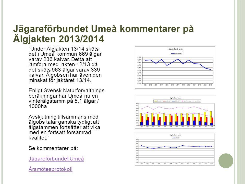 """""""Under Älgjakten 13/14 sköts det i Umeå kommun 669 älgar varav 236 kalvar. Detta att jämföra med jakten 12/13 då det sköts 963 älgar varav 339 kalvar."""