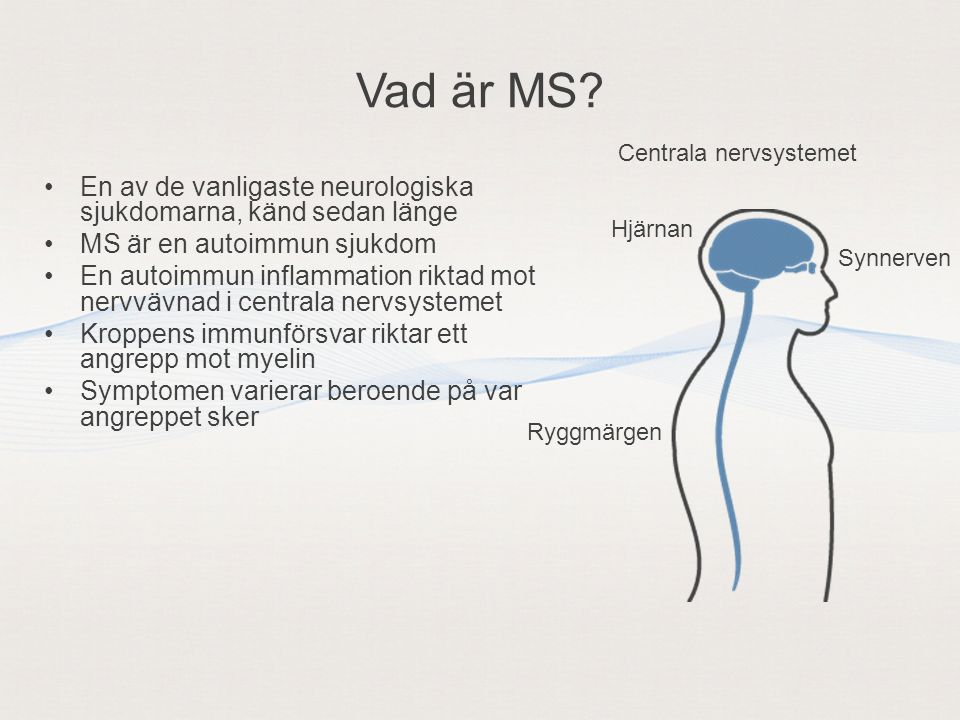 •En av de vanligaste neurologiska sjukdomarna, känd sedan länge •MS är en autoimmun sjukdom •En autoimmun inflammation riktad mot nervvävnad i centrala nervsystemet •Kroppens immunförsvar riktar ett angrepp mot myelin •Symptomen varierar beroende på var angreppet sker Ryggmärgen Hjärnan Synnerven Centrala nervsystemet