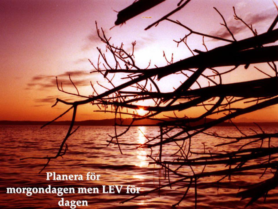 Planera för morgondagen men LEV för dagen För dagen LIVE for today LIVE for today