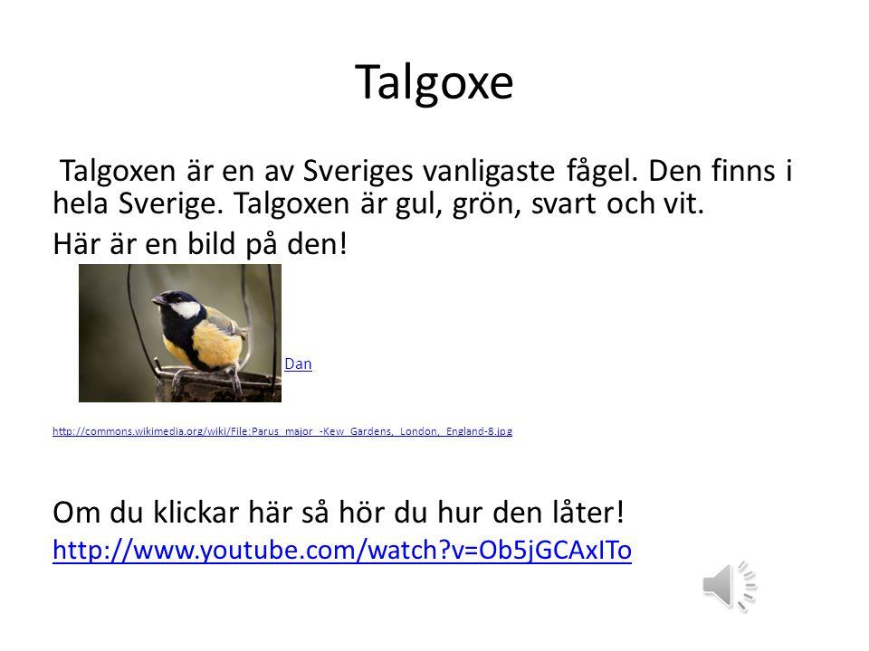 Talgoxe Talgoxen är en av Sveriges vanligaste fågel.