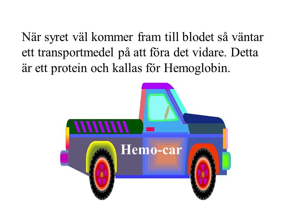 När syret väl kommer fram till blodet så väntar ett transportmedel på att föra det vidare. Detta är ett protein och kallas för Hemoglobin. 1 Hemo-car