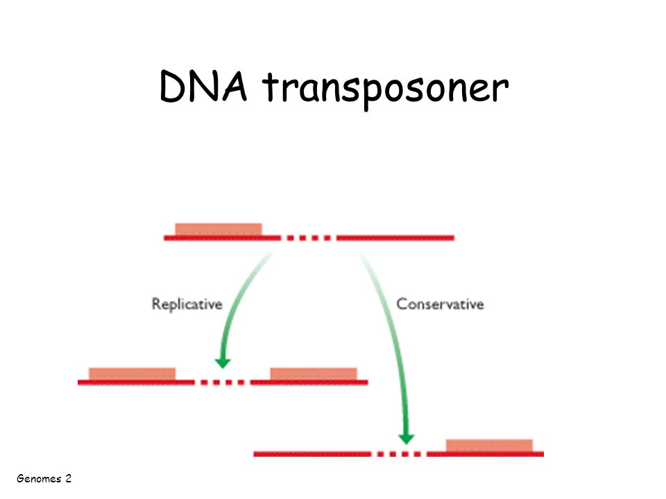 DNA transposoner Genomes 2