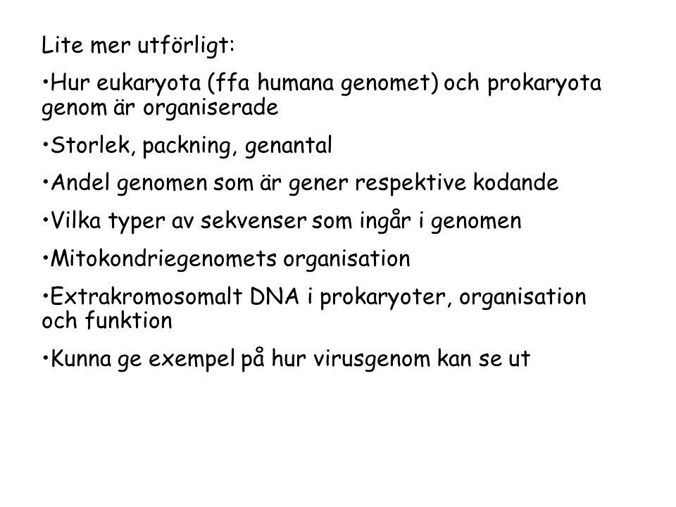 Lite mer utförligt: •Hur eukaryota (ffa humana genomet) och prokaryota genom är organiserade •Storlek, packning, genantal •Andel genomen som är gener