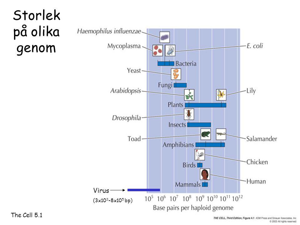 Storlek på olika genom The Cell 5.1 Virus (3x10 3 -8x10 5 bp)