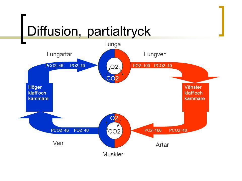 Diffusion, partialtryck LungvenLungartär Höger klaff och kammare Artär Ven Vänster klaff och kammare Muskler Lunga CO2 O2 CO2 PCO2=46 PO2=40 PO2=100 P
