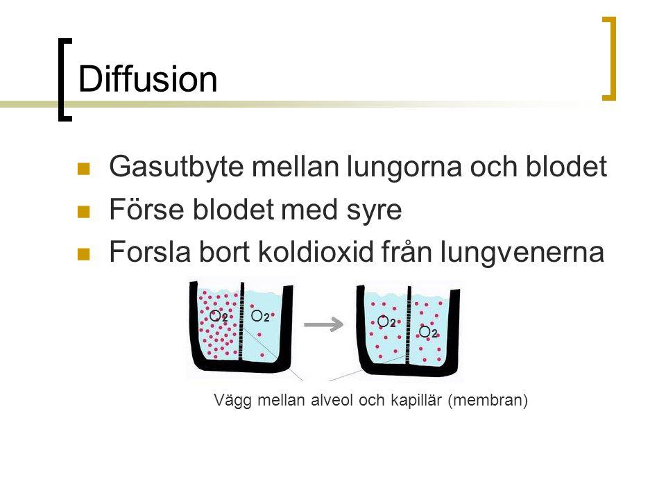  Gasutbyte mellan lungorna och blodet  Förse blodet med syre  Forsla bort koldioxid från lungvenerna Vägg mellan alveol och kapillär (membran) O2O2
