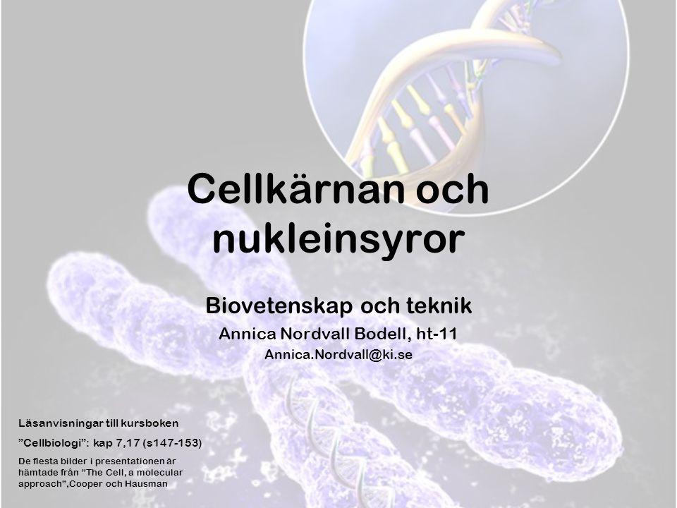 """Cellkärnan och nukleinsyror Biovetenskap och teknik Annica Nordvall Bodell, ht-11 Annica.Nordvall@ki.se Läsanvisningar till kursboken """"Cellbiologi"""": k"""