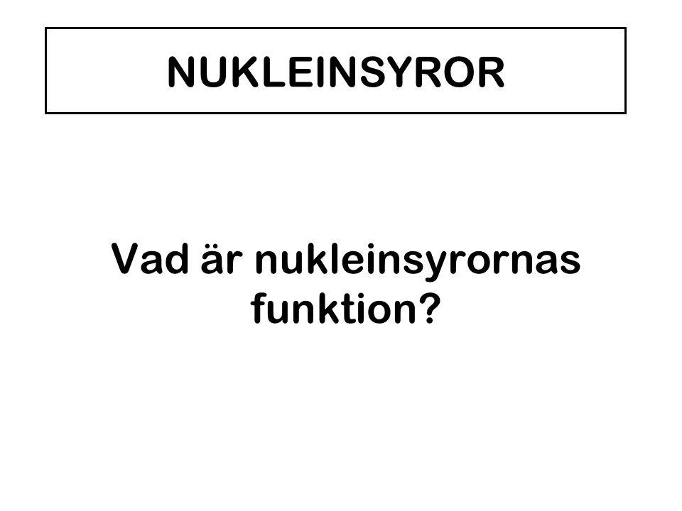 Vad är nukleinsyrornas funktion? NUKLEINSYROR