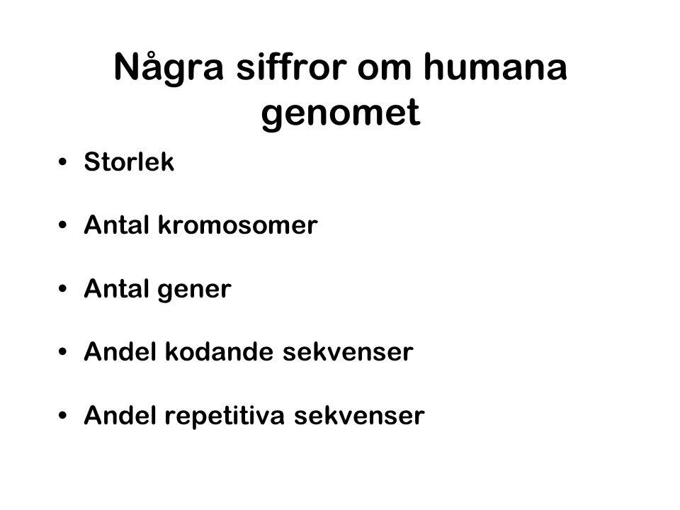 Några siffror om humana genomet •Storlek •Antal kromosomer •Antal gener •Andel kodande sekvenser •Andel repetitiva sekvenser
