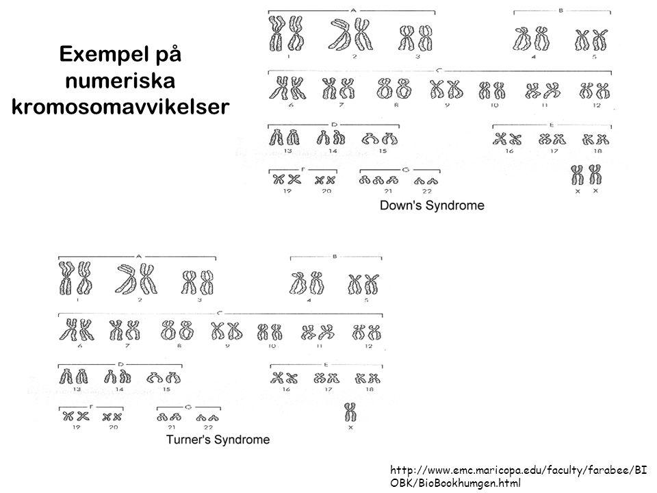Exempel på numeriska kromosomavvikelser http://www.emc.maricopa.edu/faculty/farabee/BI OBK/BioBookhumgen.html