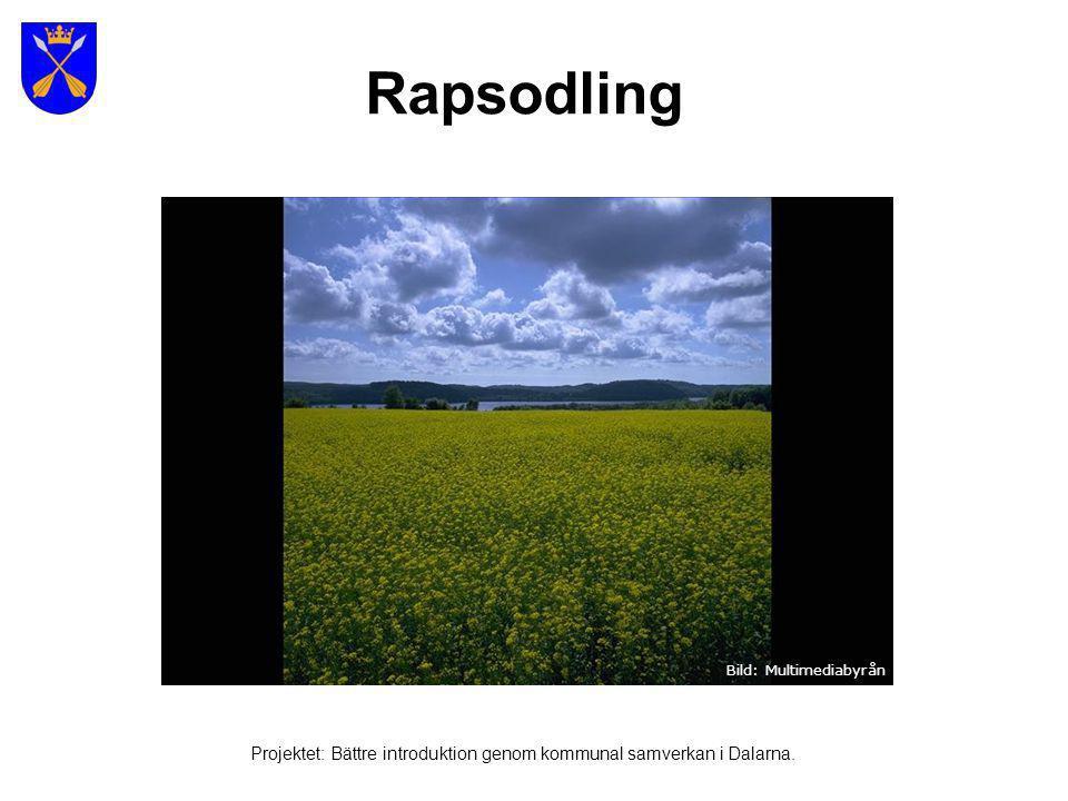 Sydkustbild - Öresundsbron Bild: Multimediabyrån Projektet: Bättre introduktion genom kommunal samverkan i Dalarna.