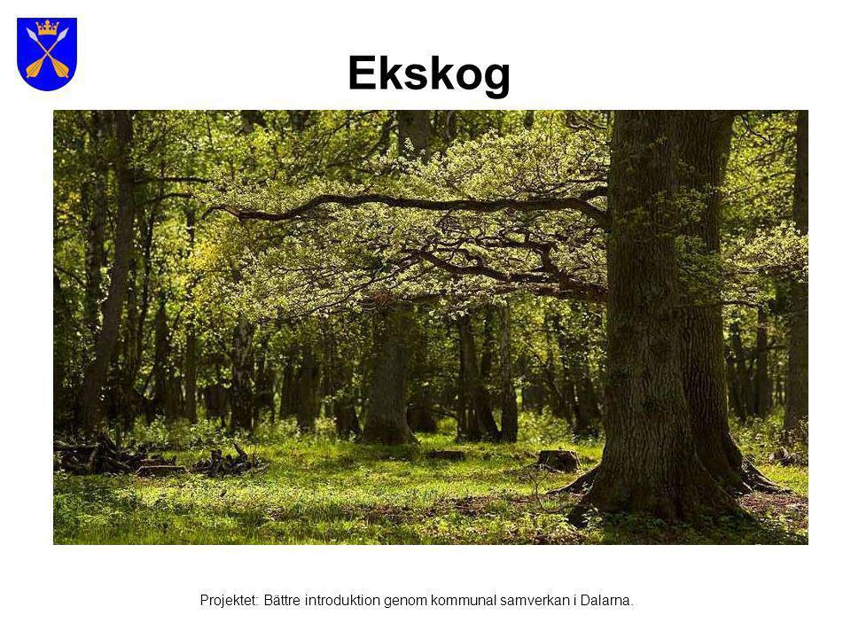 Skördetröska i mellersta Sverige Projektet: Bättre introduktion genom kommunal samverkan i Dalarna.
