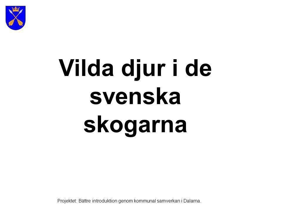 Björn Projektet: Bättre introduktion genom kommunal samverkan i Dalarna.