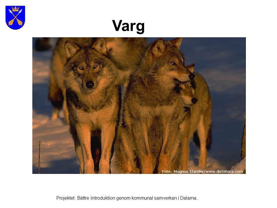 Järv Bild: Multimediabyrån Projektet: Bättre introduktion genom kommunal samverkan i Dalarna.