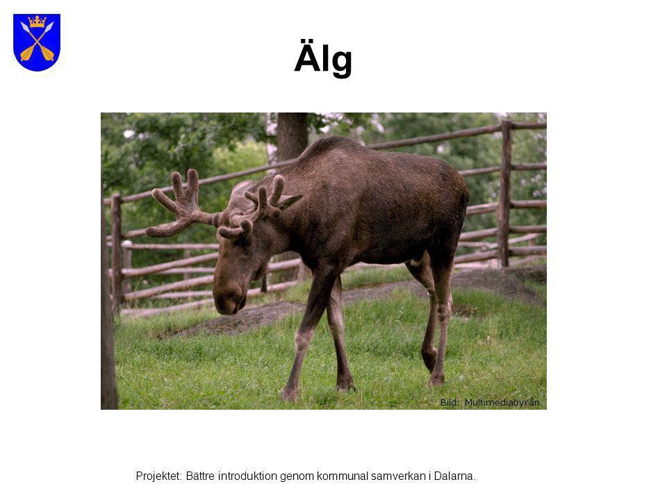 Ren Bild: Multimediabyrån Projektet: Bättre introduktion genom kommunal samverkan i Dalarna.