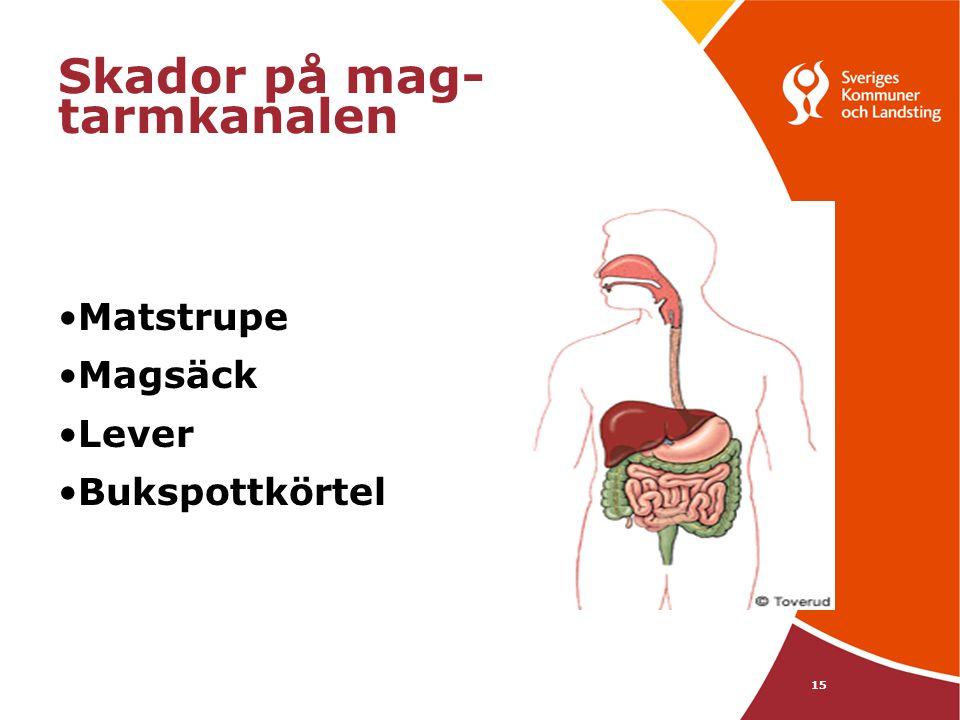 15 Skador på mag- tarmkanalen •Matstrupe •Magsäck •Lever •Bukspottkörtel