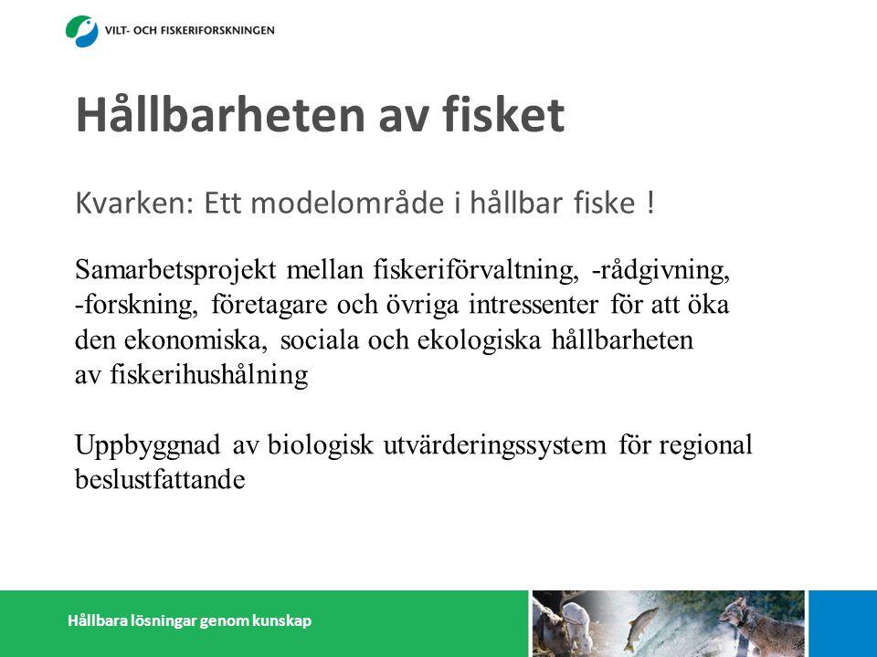 Hållbara lösningar genom kunskap Hållbarheten av fisket Kvarken: Ett modelområde i hållbar fiske ! Samarbetsprojekt mellan fiskeriförvaltning, -rådgiv