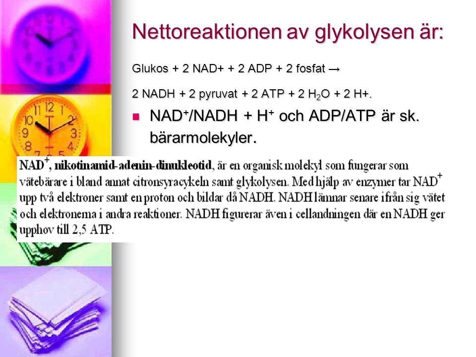 Nettoreaktionen av glykolysen är: Glukos + 2 NAD+ + 2 ADP + 2 fosfat → 2 NADH + 2 pyruvat + 2 ATP + 2 H 2 O + 2 H+.  NAD + /NADH + H + och ADP/ATP är