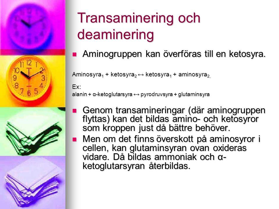 Transaminering och deaminering  Aminogruppen kan överföras till en ketosyra. Aminosyra 1 + ketosyra 2 ↔ ketosyra 1 + aminosyra 2, Ex: alanin + α-keto