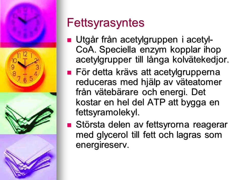 Fettsyrasyntes  Utgår från acetylgruppen i acetyl- CoA. Speciella enzym kopplar ihop acetylgrupper till långa kolvätekedjor.  För detta krävs att ac