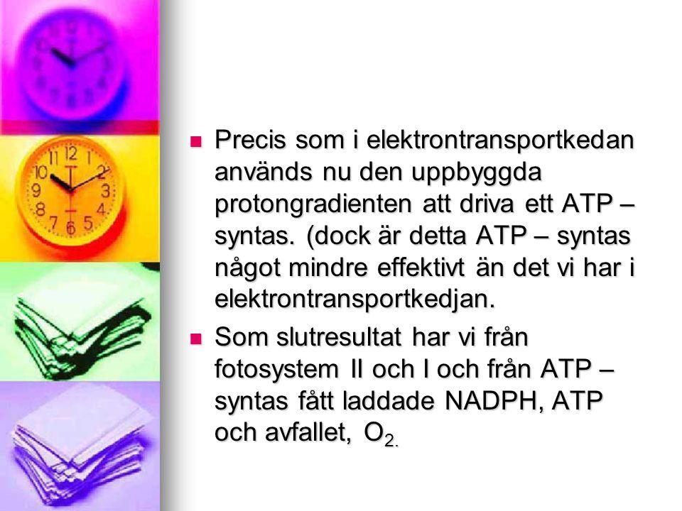 Precis som i elektrontransportkedan används nu den uppbyggda protongradienten att driva ett ATP – syntas. (dock är detta ATP – syntas något mindre e